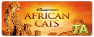African Cats: Chasing a Dog