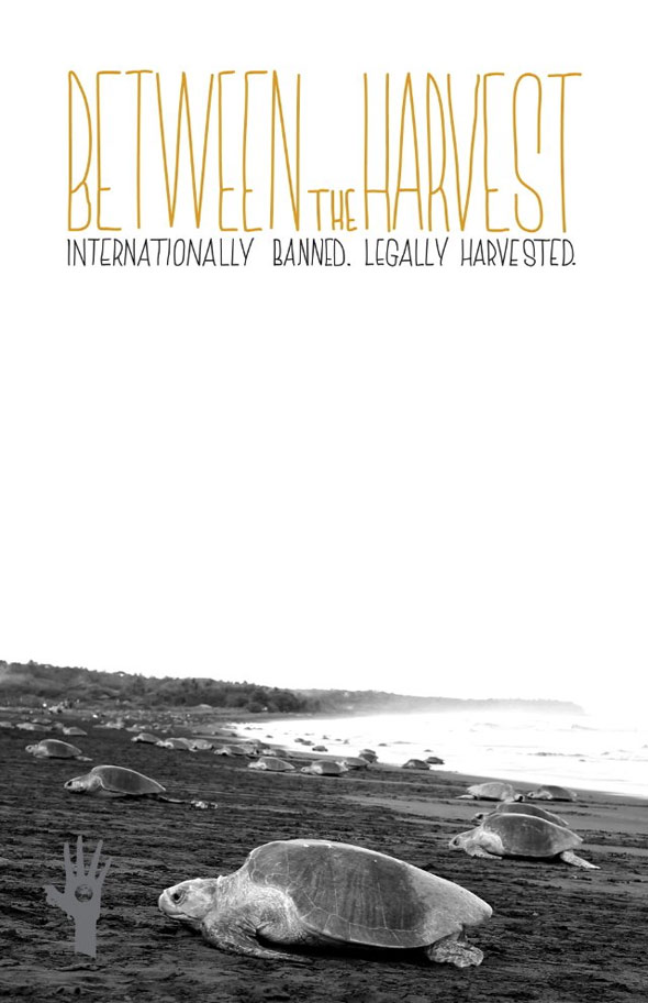 Between the Harvest Poster